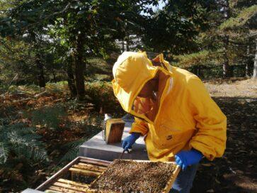 verifica salute api