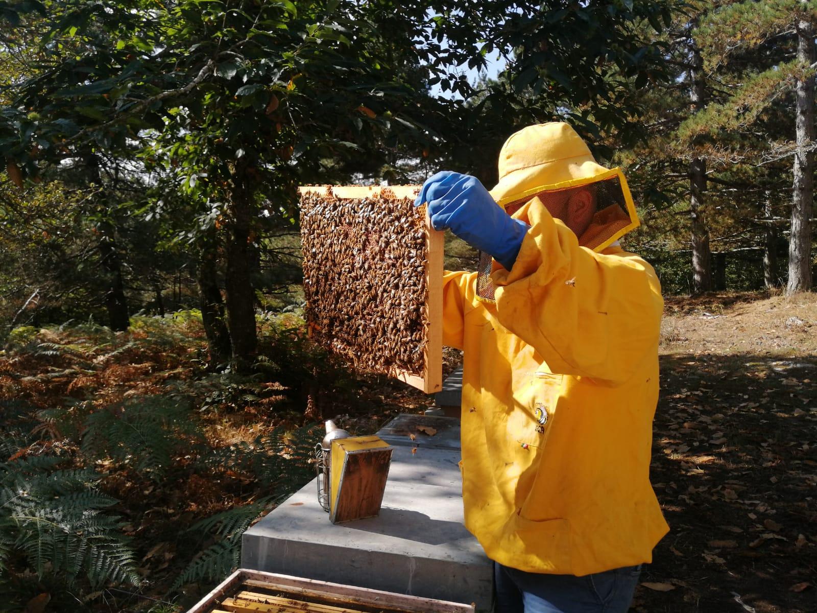 Controllo arnie e verifica salute api